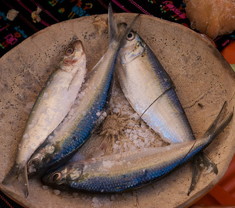 La Paz Mexico Novemeber 2012 Sardine Cook Off!  What they really look like as most of us have only seen them in cans.
